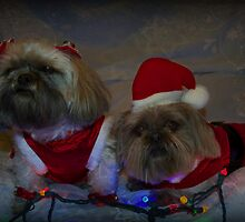 Mr. & Mrs. Claus by Nicole  Markmann Nelson