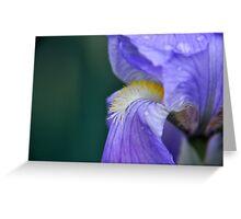 Purple Iris Flower Greeting Card