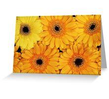 Gerbera Flowers, Petals, Blossoms - Yellow Greeting Card