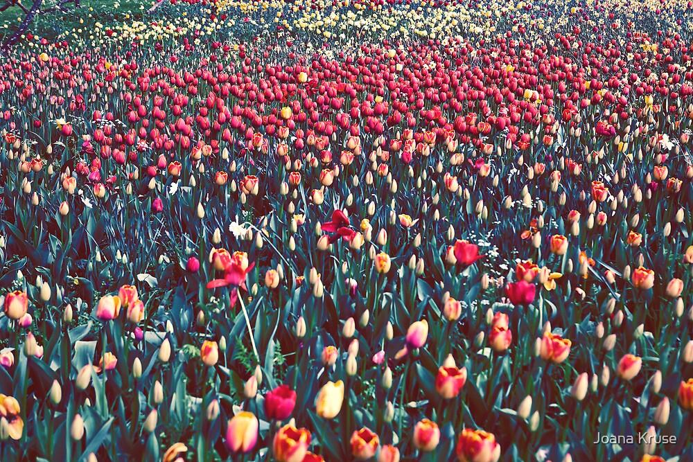 Tulips by Joana Kruse