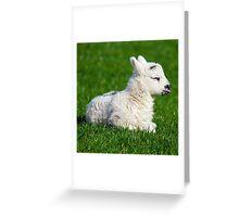 Lamb - A Newborn Greeting Card