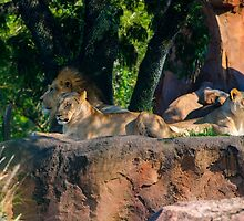 Zoo Animals by Russell102