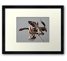 """Get Off My Light - I Was Here First"" Framed Print"