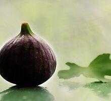 Fig Leaf by Aviana