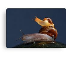 Just hitching a ride Canvas Print