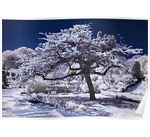 Infrared japanese tree Poster
