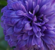 Purple flower Macro Sticker
