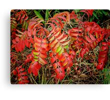Red In December Canvas Print