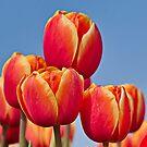 Tulips in the sky by Lindie Allen