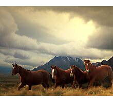 Four Horses Photographic Print