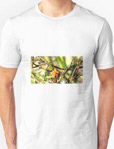 Robin Sitting On A Branch T-Shirt