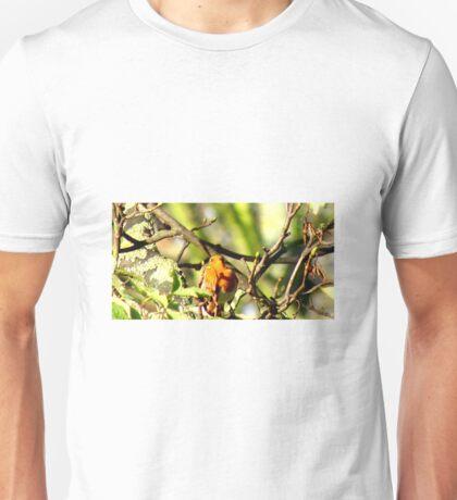 Robin Sitting On A Branch Unisex T-Shirt