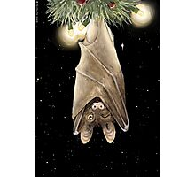 African Christmas: Bat Photographic Print
