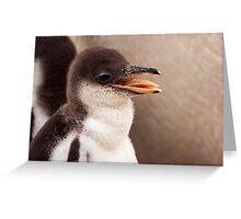 Gentoo Penguin Chick Greeting Card