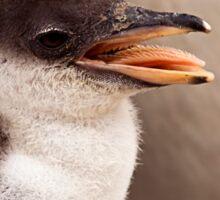 Gentoo Penguin Chick Sticker