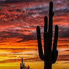 Sunsets by Mary Warner by Mary Warner
