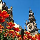 Tulips in Czech by katkeldeen