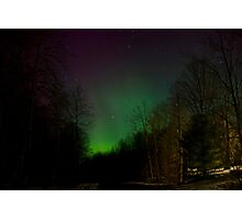 Auroras in the Woods Photographic Print