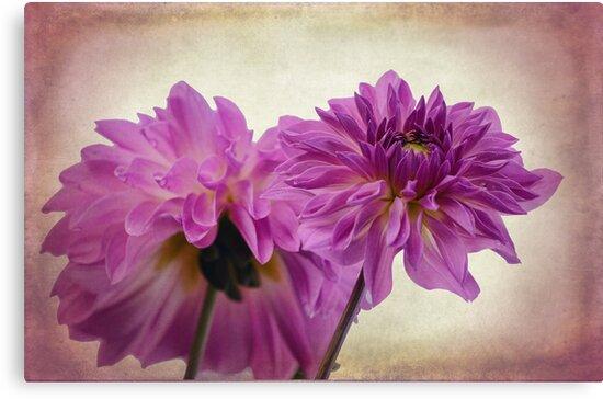 Purple by Aase