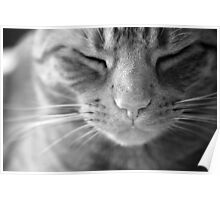 The Life of a Cat - Black and white Poster
