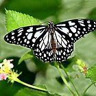 Butterfly Landing. by vette