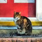 Pets - Tabby Cat by Red Door by Susan Savad