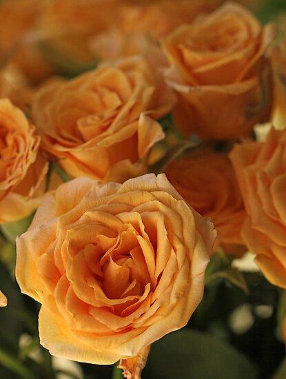 Heavenly Roses by Lynn Gedeon