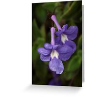 Blue flowers Leith Park Victoria 201510300538   Greeting Card