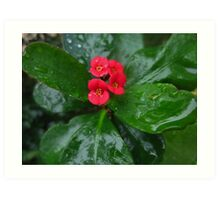 Crown of Thorns on a Rainy Day Art Print
