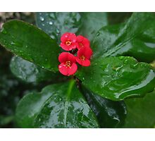 Crown of Thorns on a Rainy Day Photographic Print