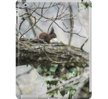 Ardilla roja | Red squirrel iPad Case/Skin