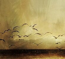 Wings by andaluzina