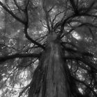 TREE OF LIFE by aRj Photo