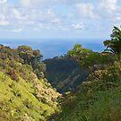 Along the Road to Hana, Maui by Barb White