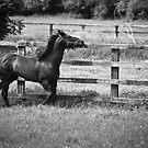 Greener Pastures by Nigel Bryan