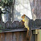 Curious Neighbor by Greg Belfrage