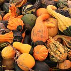  Gourds ~ a Bountiful Harvest by SummerJade