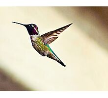 Humming Bird Photographic Print