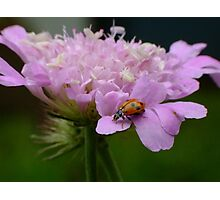 Pretty Ladybird Photographic Print