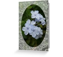 Pale Blue Plumbago Flower With Border No Text Card Greeting Card