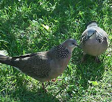 Two turtle doves by Maggie Hegarty