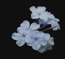 Pale Blue Plumbago Isolated on Black Background Kids Clothes