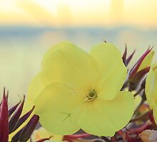 Seaside Flower by BobbiTaylor