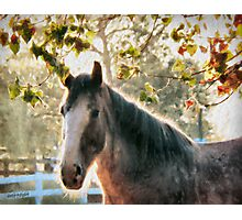 Bright Morning Beauty Photographic Print