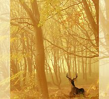 Enchanted forest by Chris Armytage™