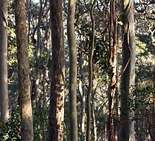 Coastal Eucalypt Forest by Timothy John Keegan