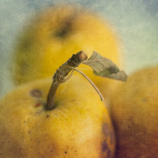 Grunge apples by Jill Ferry