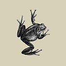 Frog by AirDrawn