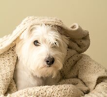Snuggle by Edward Fielding