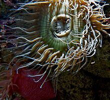 Wild Jelly Fish Hairdo by phil decocco